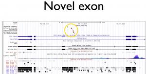 Novel Exon