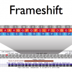 Frameshift